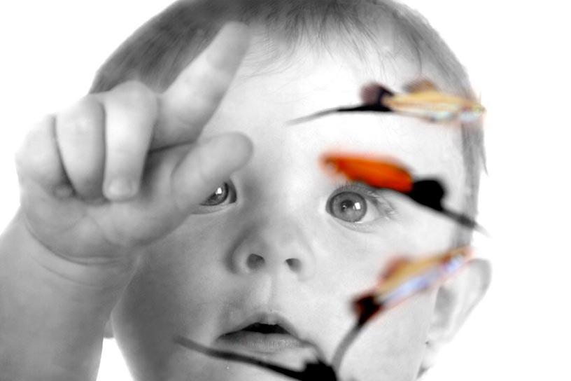 un enfant qui touche un aquarium vu depuis l'intérieur de l'aquarium