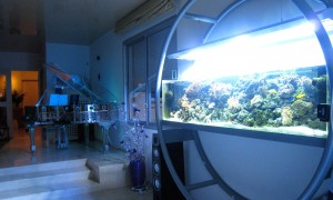Bespoke seawater aquarium created and designed by Olivier Clavel