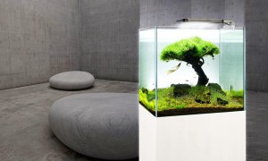 Aquarium with pared-back design