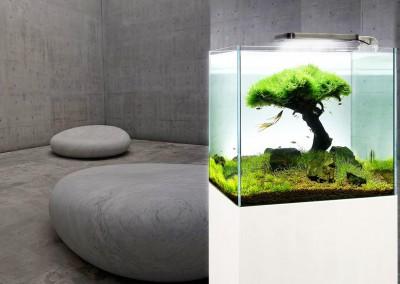 Aquarium au design épuré